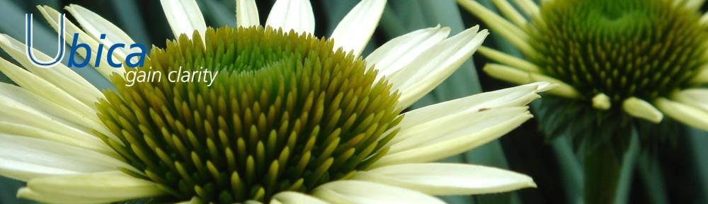 copy-cropped-flower1.jpg